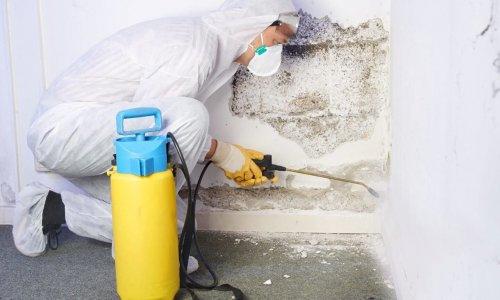 Pest controler eliminiates a mold infestation